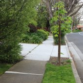 Please remember to water both street and private trees on your property